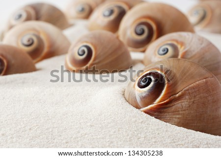Spiral snail seashells on white sand with copy space.  Macro with shallow dof. - stock photo