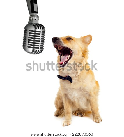 Spitz dog with microphone on white background - stock photo