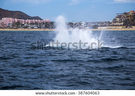 Splash of a Breaching Whale in the Water of Ocean