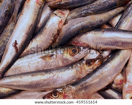 Splendid Plentiful Silvery Sardines in Abundance. - stock photo