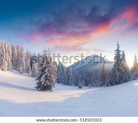 Splendid winter sunset in Carpathian mountains with snow covered fir trees. Colorful outdoor scene, Happy New Year celebration concept. Artistic style post processed photo.