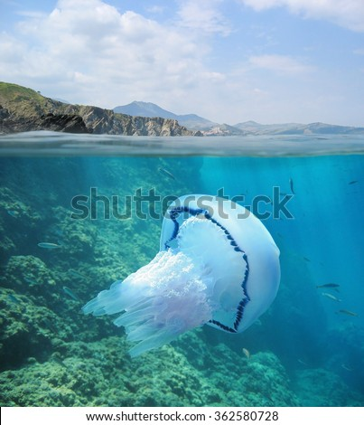 Split image above and below water surface, rocky coast at the horizon with a jellyfish underwater, Mediterranean sea, Pyrenees Orientales, France - stock photo