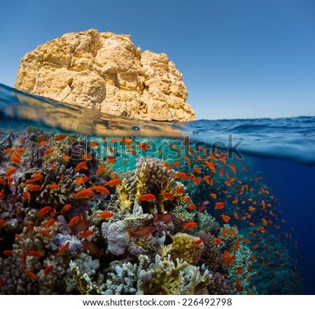 Split shot of the bright coral reef in Ras Mahammad National Park, Red Sea, Egypt - stock photo