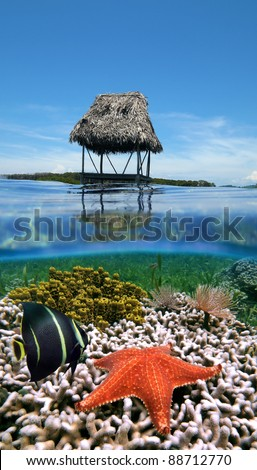 Split view in the Caribbean sea with a thatched hut on stilts over water and underwater a coral reef with an angelfish and a starfish - stock photo