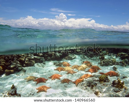 Split view in the ocean with group of starfish underwater and above surface, blue sky with cloud - stock photo