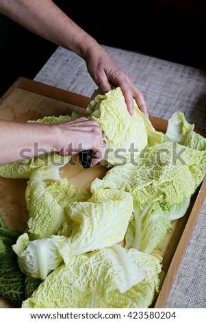 Splitinng of cabbage leaves before preparing Golabki a traditional Polish dish   - stock photo