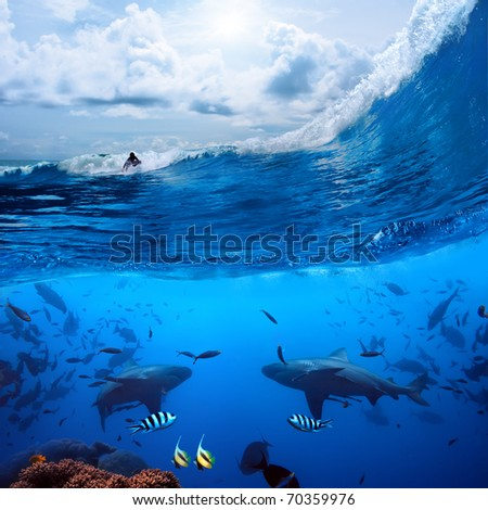 Splitted two parts image extreme sport in ocean and a surfer that sliding a surfing board on wave  and angry hungry bull-sharks swiming underwater - stock photo