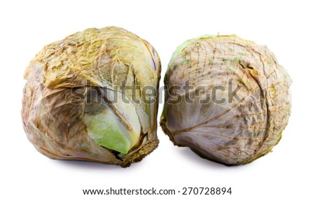 spoiled cabbage isolated on white background - stock photo