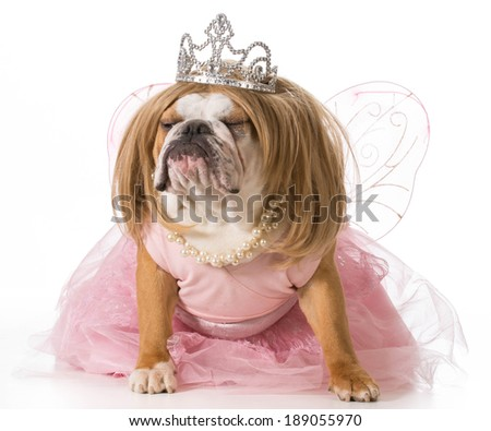 spoiled dog - english bulldog wearing princess costume - stock photo
