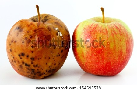spoiled one bad red apple on white background Healthy and rotten apples - stock photo