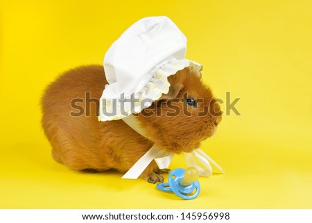 spoiled pig side view - stock photo