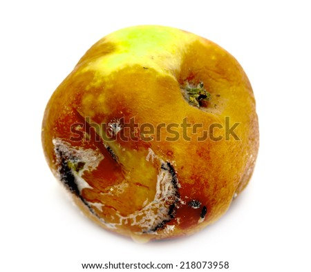 spoiled rotten apple on a white background - stock photo