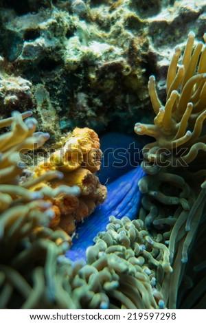Sponge and sea anemone - stock photo