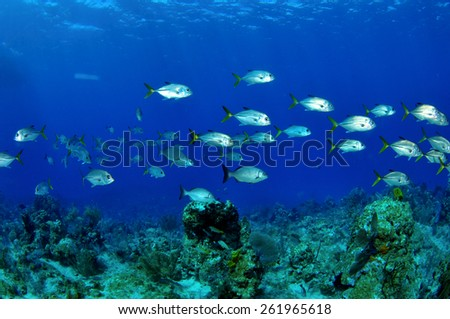 Sponges and fish on a Cayman reef, Grand Cayman