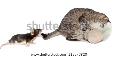 Spoof humorous image of a mischievous mouse turning the tables on a hunting cat by watching its every move from just behind its tail - stock photo