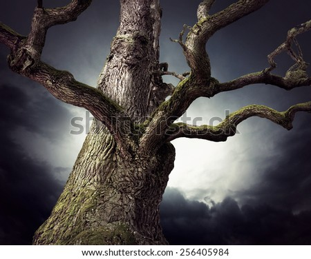 Spooky bare oak tree on dark sky in shades of blue and purple - stock photo