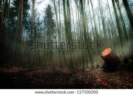 Spooky foggy Bavarian Forrest in February - stock photo