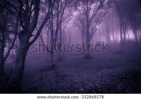 Spooky foggy forest at halloween night. - stock photo