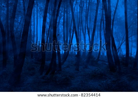 Spooky foggy mountain forest at night - stock photo