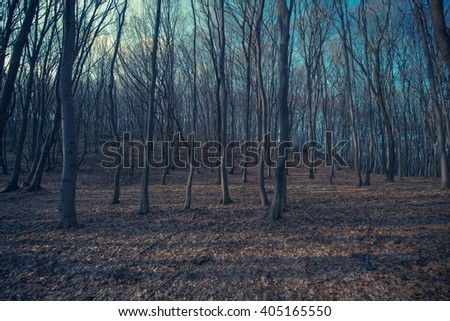 Spooky Forest Landscape Nature Background. Late Fall Forest Scenery. - stock photo