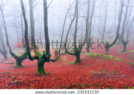 spooky forest with creepy trees - stock photo