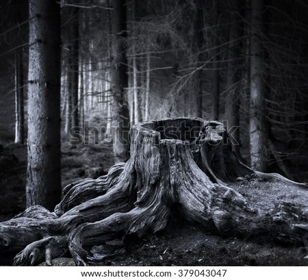 Spooky forest with dry tree stump in foreground