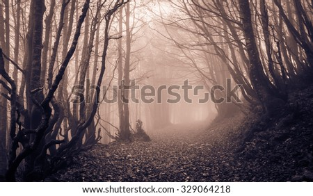 Spooky forest with path of Monte Catria, Marche - Italy. - stock photo