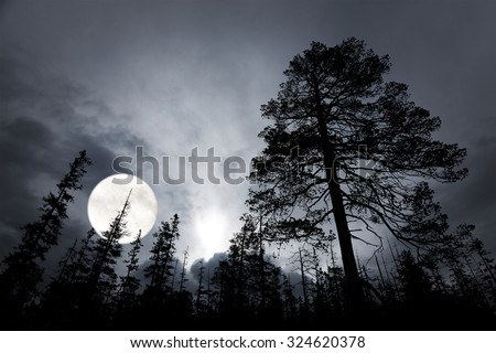 spooky forest with silhouettes of trees, dark sky and big full moon - stock photo