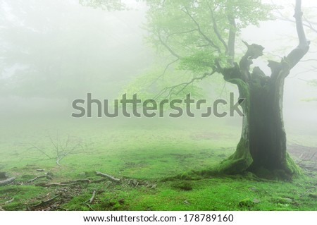 spooky hollow tree with fog in forest