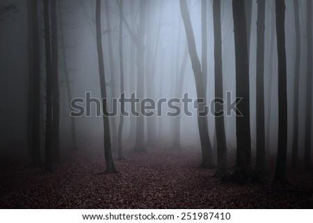 Spooky misty forest - stock photo