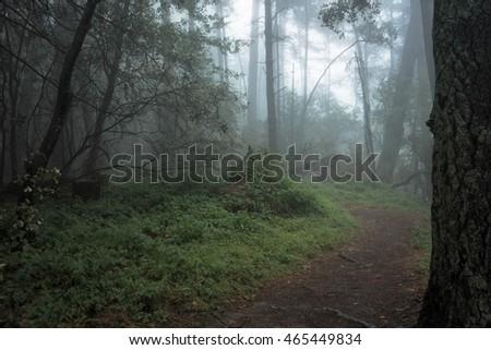 Spooky path in the gloomy woods of Sibley