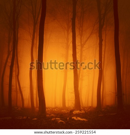 Spooky red saturated color forest scene with yellow orange light in background. - stock photo