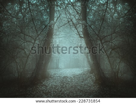 Spooky strange shaped trees in a forest in a misty day - stock photo