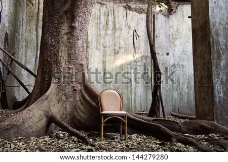 spooky tree and the chair with the old wall on background - stock photo