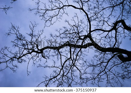 spooky tree branches overhead