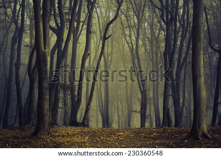 Spooky twisted trees in dark foggy forest - stock photo