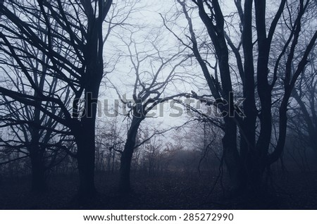 spooky twisted trees in dark forest
