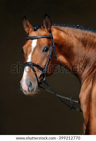 Sport dressage horse in dark manege    - stock photo