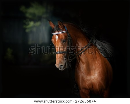 Sport dressage horse in manege over a dark background - stock photo