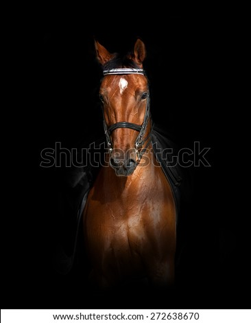 Sport dressage horse over a black background in front view - stock photo