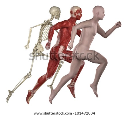 Sport fitness man anatomy. muscles and bones - stock photo
