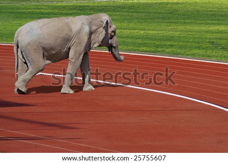 Sport is for everyone - Photo composition with elephant - stock photo