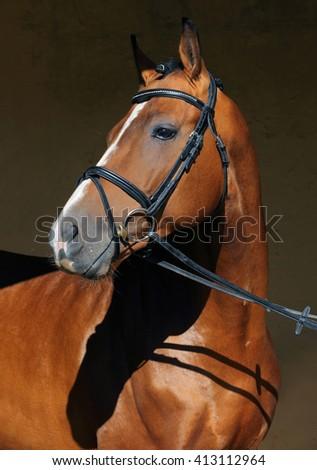 Sports purebred stallion in dark stable  - stock photo