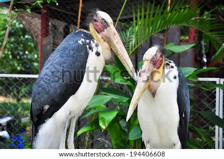 Spot-billed pelican are standing on the short three - stock photo