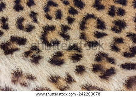 Spots on real leopard skin