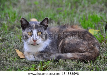 Spotted cat lying on the grass near the falling leaves.