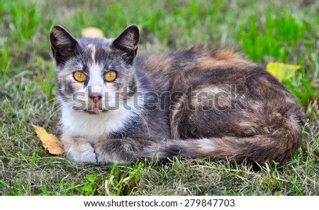 Spotted cat lying on the grass near the falling leaves