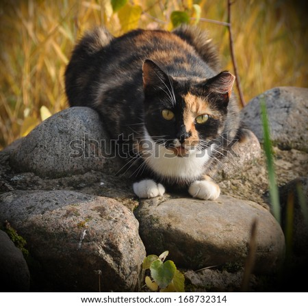 Spotted cat sitting on large rocks.