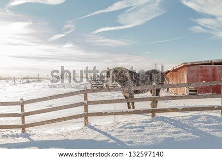 Spotted horse on farmland snow covered fenced field - stock photo