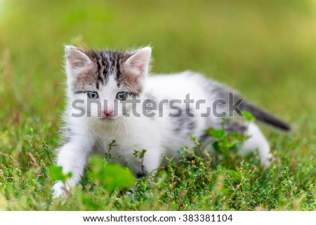 Spotted kitten walk in the grass in the garden - stock photo